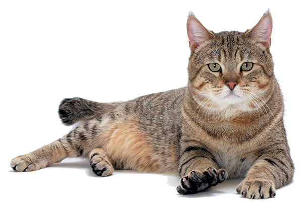 Kass nimega Bob
